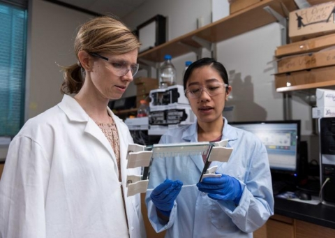 <p>Researcher Christine He shows Georgia Tech researcher Martha Grover a gel slide that separates out gene strands.</p>