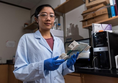 <p>Researcher Christine He holds a gel slide that separates out gene strands.</p>