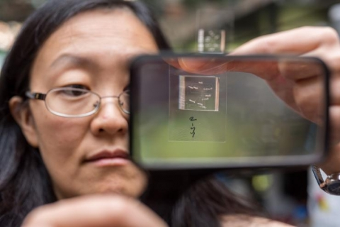 <p>Engineering Professor Hang Lu holds up a chip used to immobilize <em>C. elegans</em> roundworms for photographing by a microscope optic connected to a computer. The chipthensorts the wormsinto one of two channels for either mutants or non-mutants, a statusan algorythm determinesbased on subtle phenotypical differences itrecognizesin the microscope photo. Credit: Georgia Tech / Rob Felt</p>