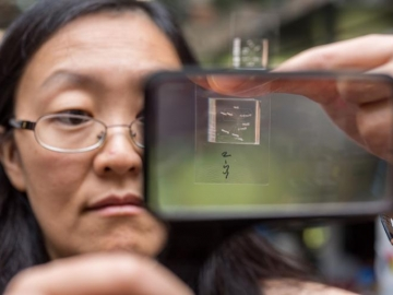 <p>Engineering Professor Hang Lu holds up a chip used to immobilize <em>C. elegans</em> roundworms for photographing by a microscope optic connected to a computer. The chip then sorts the worms into one of two channels for either mutants or non-mutants, a status an algorythm determines based on subtle phenotypical differences it recognizes in the microscope photo. Credit: Georgia Tech / Rob Felt</p>