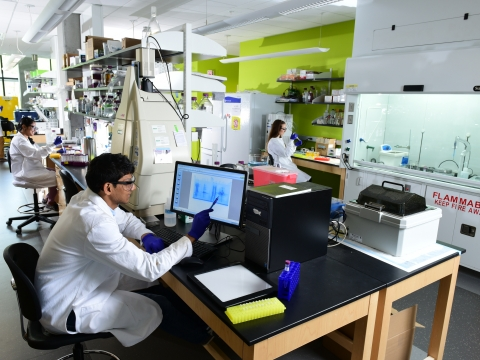 Grad students working in the lab.